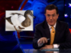 Lame Duck Congress - Jake Tapper - The Colbert Report - 12/1/10 - Video Clip | Comedy Central