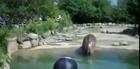 Hippo Has A KING Shart.  LOL