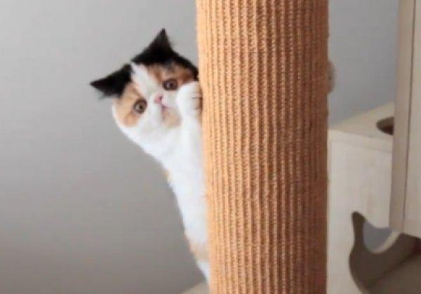 How to calm my hyper cat