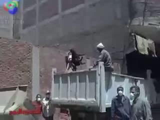 Muslim Animal Abuse in Egypt | PopScreen