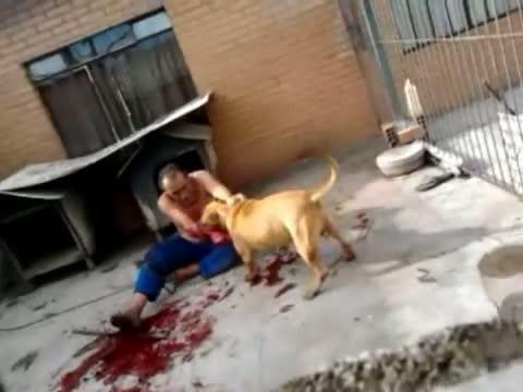 Pitbull Puppy Biting Older Dog