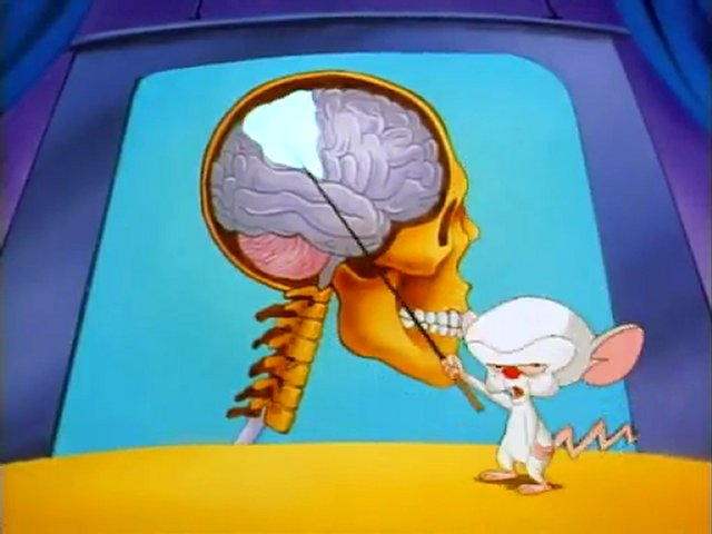 Whos the real smart one the pinky and the brain theory cartoon https3dimg02popscreenoriginal40eg9iahvtmtiopinky and the brain brainstemg altavistaventures Choice Image