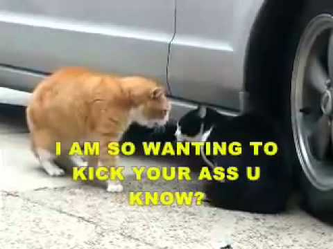 Funny Cats Fighting (with subtitles).2011 | PopScreen