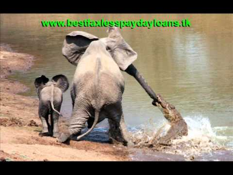 Elephant Crocodile Tug of War Elephant vs Crocodile Tug of