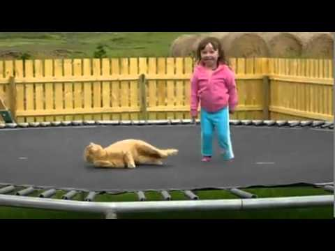 Trampoline - Little Girl and Cat - Funny Video   PopScreen