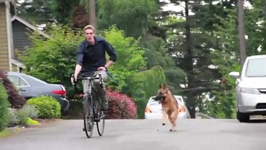 The Pawsitive Packleader Dog Training Video - Seattle, ... | PopScreen