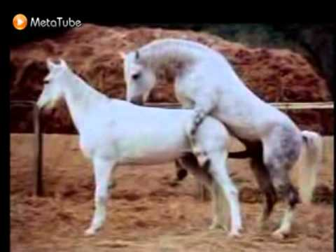 animal sex tube,horse sex,zoo sex,dog porn,horse fuck video,zoo . | PopScreen