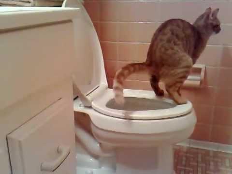 Deu certo 02 - Gato fazendo 'coco' no vaso sanitário | PopScreen